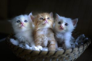 Three cute little kittens as pets.