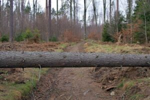 A tree log blocking a road. as an obstacle.
