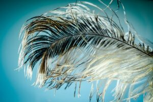 Authentic Happiness Authentic Love. Ostrich feather.
