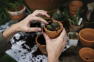 How to be happy Create your own Happiness.  Having a hobby, potting small plants with mud on your fingers in their containers