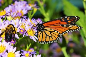 How To Be Happy, Create your own Happiness, see little things around you, the butterfly and n bee on a purple flowe