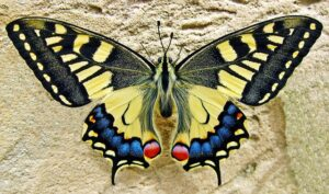get your ex back  compare your change to the life cycle of a butterfly.